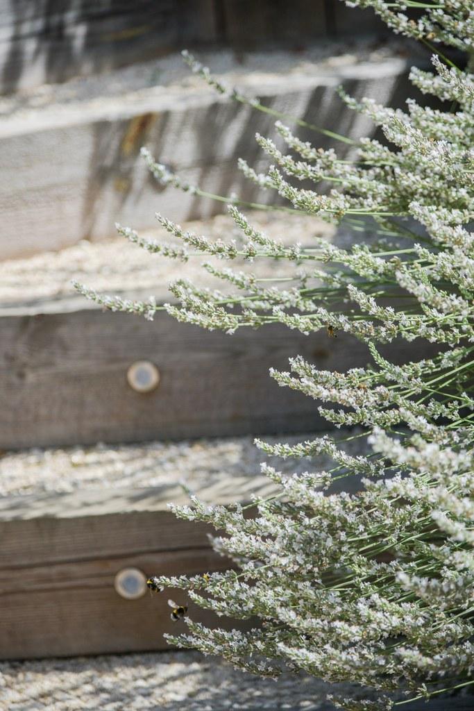 escalier en bois et lavande