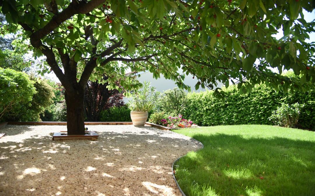 arbre dans la cour