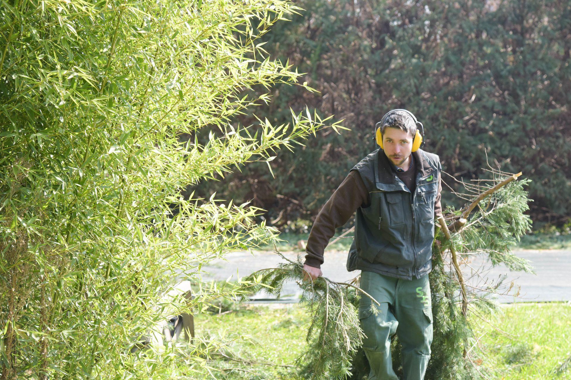 jardinier elagage