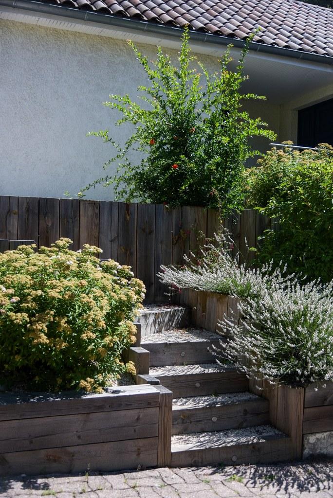 entretien jardinage rosiers et fleurs