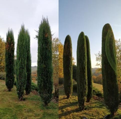 Conseils de pros pour un aménagement paysager autour de la piscine et de la maison à Lyon et dans l'Ouest Lyonnais (69)